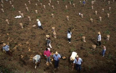 Los Realejos ofrece semillas y frutales para agricultores en desempleo del municipio