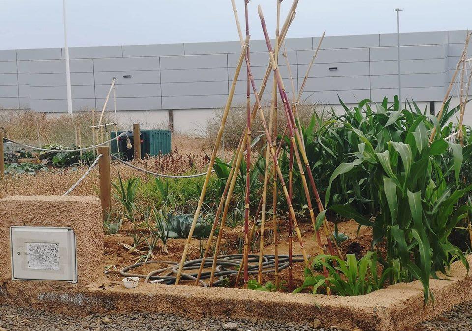 Los Realejos abre plazo de solicitud para adjudicar otras 10 parcelas disponibles de huertos urbanos en El Burgado