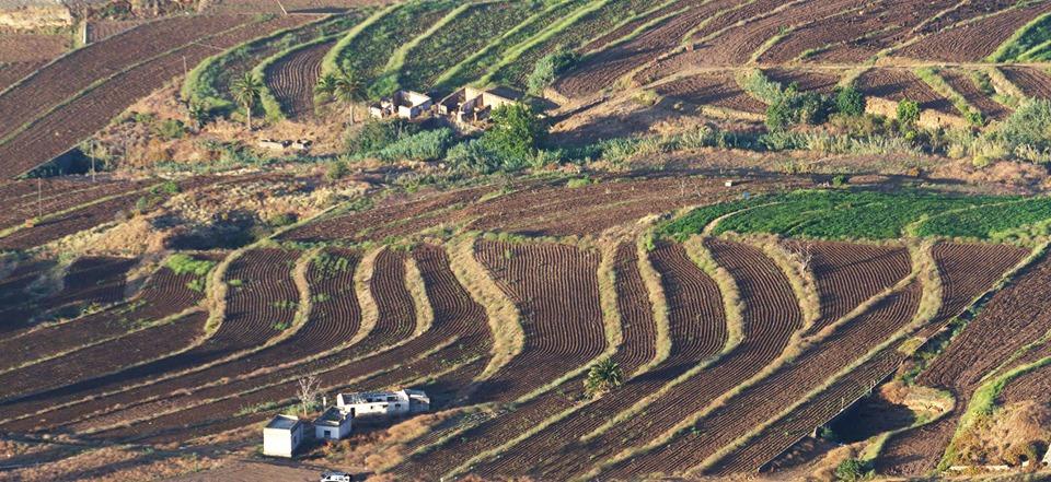 Los Realejos subvenciona la incorporación de mejoras en sistemas de riego en explotaciones agrarias