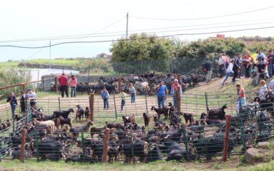 El Ayuntamiento de Los Realejos emite un decreto con las medidas a adoptar relación con el traslado de ganado con motivo del COVID-19