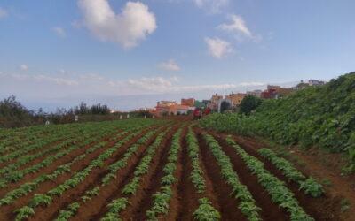 Los Realejos potencia su 'Banco de tierras' para la recuperación del cultivo en parcelas abandonadas