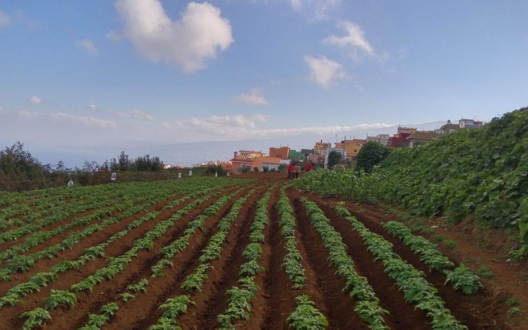 Los Realejos subvenciona proyectos innovadores y con medidas por la sostenibilidad en agricultura y ganadería