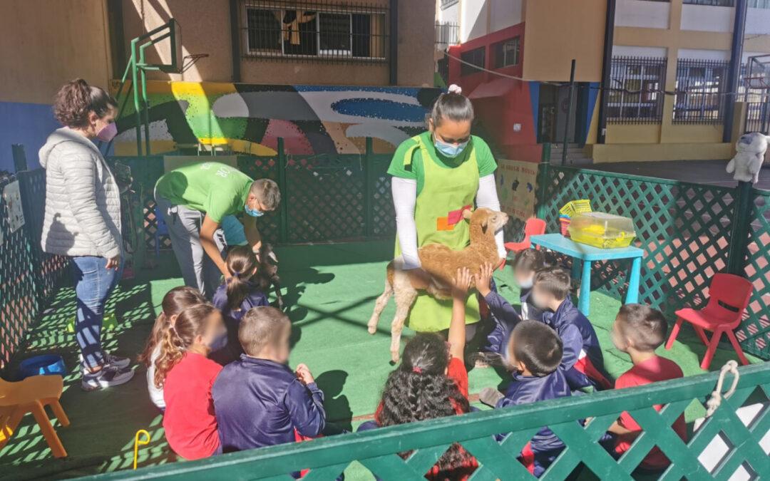 Una granja escuela itinerante visita los colegios realejeros a iniciativa de Educación y Desarrollo Rural