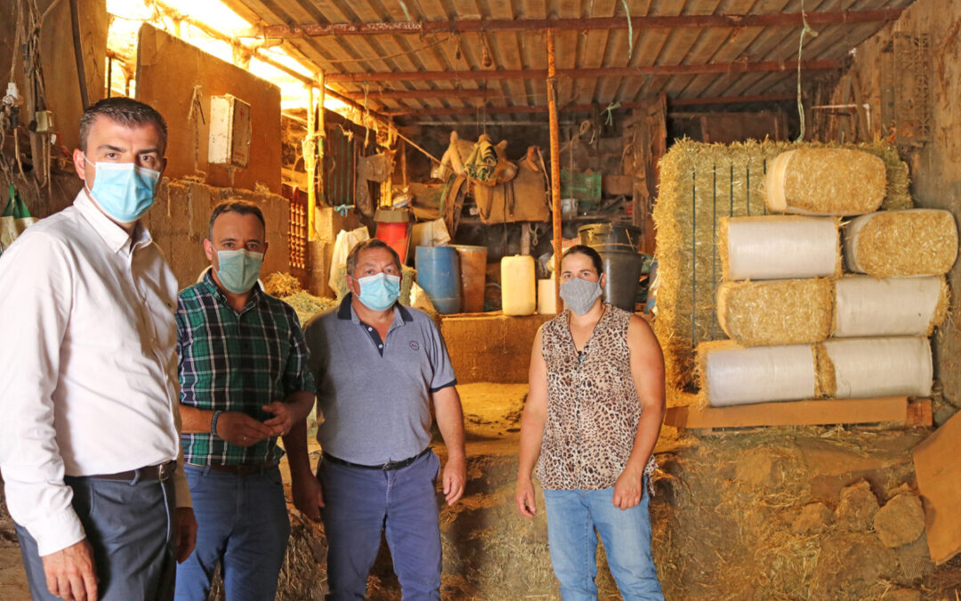 Los Realejos reedita sus ayudas municipales en especies en alimentación animal para el sector ganadero
